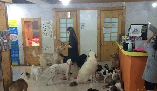 Dog Café