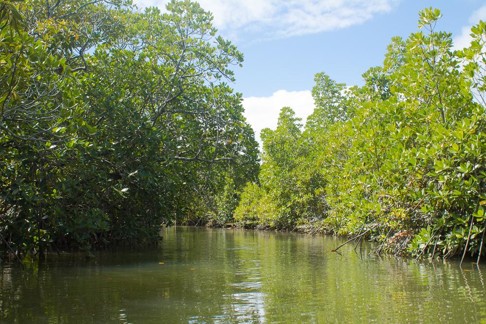 Pirogue / Mangrove Sainte Marie