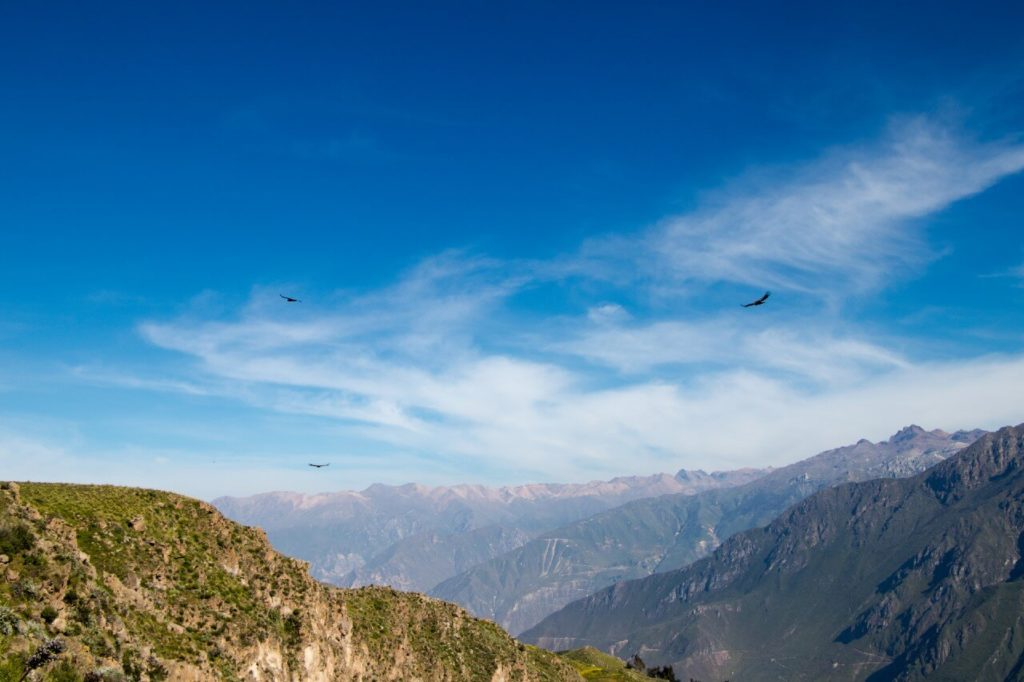 Paysage condors